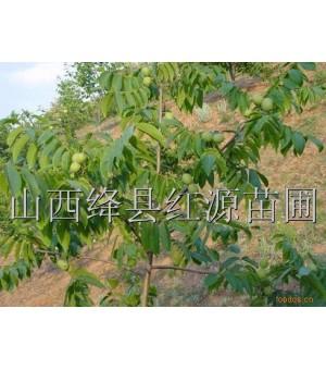 供应优质核桃苗苹果苗桃树苗樱桃苗山楂苗