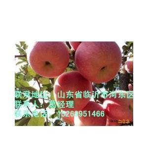 哪里的苹果苗最便宜,哪里的苹果苗价格最低